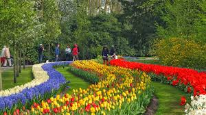 flower garden in amsterdam spring break bank holidays and weekends in the world u0027s most