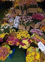 23 best home u0026 garden shows images on pinterest international