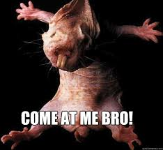 Naked Mole Rat Meme - come at me bro naked mole rat quickmeme