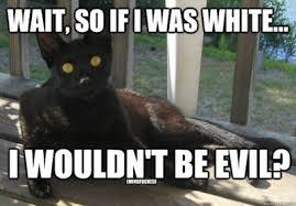 Good Luck Cat Meme - grace elliot s blog familiar felines black cats lucky or