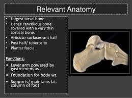 Calcaneus Anatomy Calcaneal Fractures