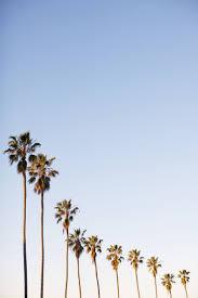 best 25 palm trees ideas on pinterest palm trees beach palm