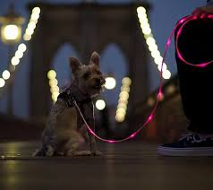 Gadgets For Pets 5 New Amazing Finds For Your Home And More Stylefrizz