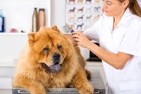 skin in dogs symptoms causes diagnosis treatment recovery