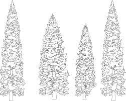 pine tree coloring pages pine trees black white line art coloring book colouring