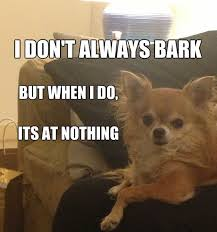 Dog Barking Meme - 12 best chihuahua memes of all time