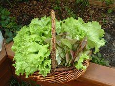 find success with your fall vegetables gardens vegetables and