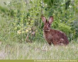 cuisiner un lapin de garenne cuisiner un lapin de garenne 28 images le terrier du lapin