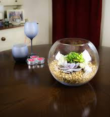gorgeous glass globe succulent terrarium to buy in the uk u2013 the