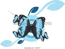 blue morpho butterfly egg stock photos blue morpho butterfly egg