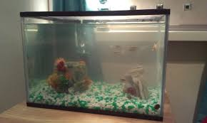 fishkeeping new tank setup fish dying forums coldwater
