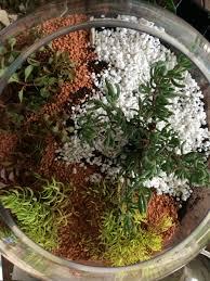 miniature terrarium fairy garden be a fun mum