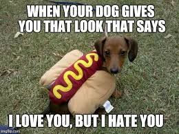 Wiener Dog Meme - puppy week a lordcakethief event june 11th 17th imgflip