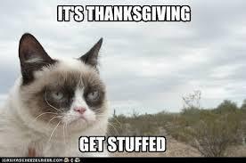 cat thursday thanksgiving cat is thankful