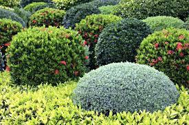 Shrub Garden Ideas Shrubs Landscape Large Size Of Garden Ideas Landscaping Shrubs