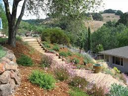 california backyard hillside landscaping plants ideas for hillside backyard slope