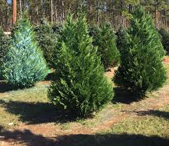 gilbert christmas tree farm home facebook