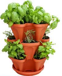 Vegetable Garden In Pots by How To Grow Cilantro In Pots