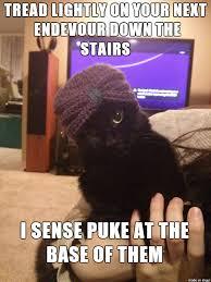 Psychic Meme - psychic cat adviceanimals