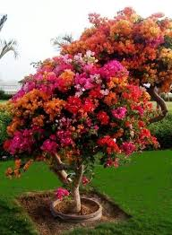 best 25 flowering trees ideas on trees to plant
