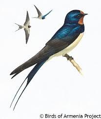 Barn Swallow Tattoo Designs 422 Best Bird Tattoos Images On Pinterest Swallows Bird Tattoos