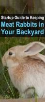 backyard meat rabbits