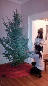 christmas tree farm u2013 cynthia reyes