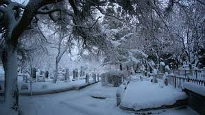 snow falling tree branches reykjavik iceland cemetery in