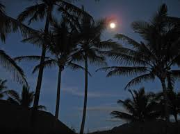 palm tree moon shooting from the hip