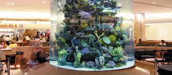 Wall Aquarium by Custom Aquariums Reef Tanks Aquarium Start Up Service Custom