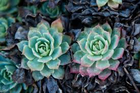 ornamental succulents and cacti sammy photo