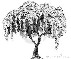 ume blossom clipart pencil sketch pencil and in color ume