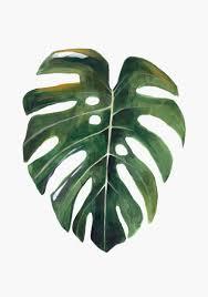 plantas disponibles en www hermanogato comoriginales pintados en
