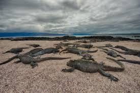 Iguana Island Galapagos Iguana Week Monday Visual Adventures