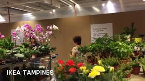 ikea plants for sale youtube
