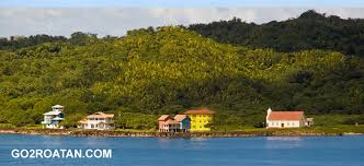 All About Flowers - all about flowers bay roatan bay islands tourism bureau official