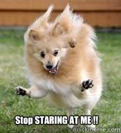 Hyper Dog Meme - hyper dog memes quickmeme