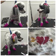 haircutsfordogs poodlemix 89 best dog grooming images on pinterest dog grooming dog