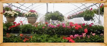 Nursery Plant Supplies by Nursery Services Fertilizer Supplies Algona Ia