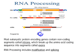 dna rna protein synthesis online quiz college algebra help