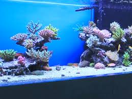 Saltwater Aquascaping Favorite Aquascapes The Reef Tank