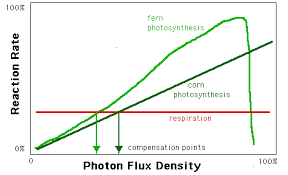 Where Do The Light Independent Reactions Occur Photosynthesis The Photo Part