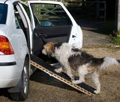 teach your senior dog to use a ramp or stairs