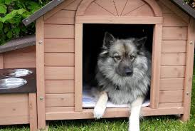 9 items of home decor for pets
