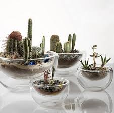 53 best gardening cactus u0026 succulents images on pinterest