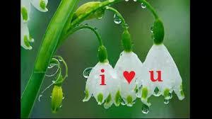 Beautiful Flowers Image