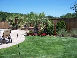 pool landscaping with palm trees
