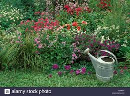 watering cans colourful stock photos u0026 watering cans colourful
