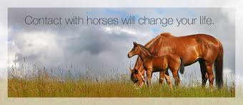 therapy openings equine assisted counseling therapy openings