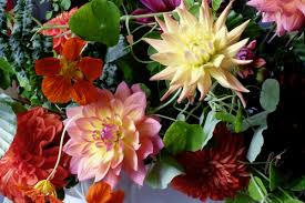 just picked look with dahlias fierce blooms